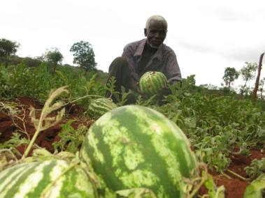 GeoffreyNdung'u - watermelon in fields