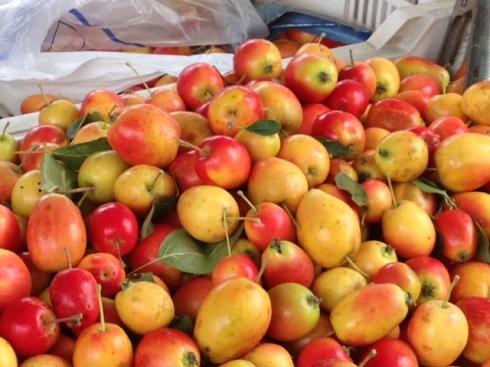 crab-apples